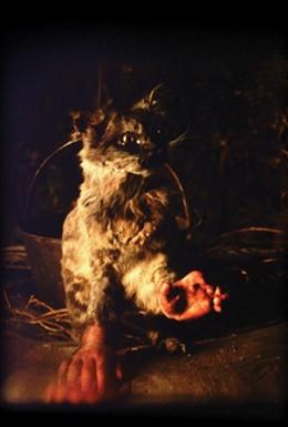 Постер фильма Кот с человеческими руками (2001)