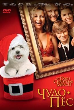 Постер фильма Чудо-пес (2011)