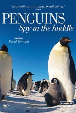 Постер фильма Пингвины: Шпион в толпе (2013)
