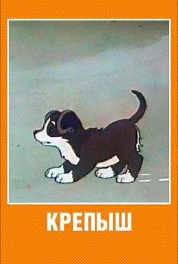 Постер фильма Крепыш (1950)