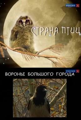 Постер фильма Страна птиц (2011)