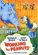 Работа за орехи (1953)