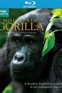 Постер фильма Горные гориллы (2010)