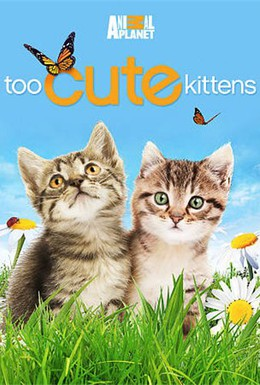 Постер фильма Симпатичные котята и щенки (2011)