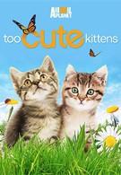 Симпатичные котята и щенки (2011)