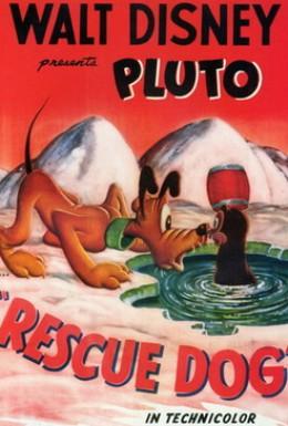 Постер фильма Собака-спасатель (1947)