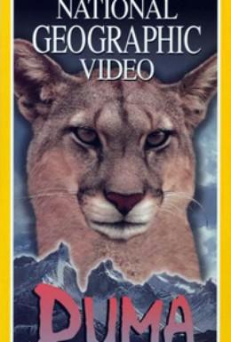 Постер фильма Пумы: Львы Анд (1996)