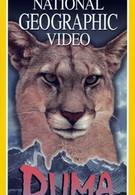 Пумы: Львы Анд (1996)