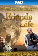 Друзья навек (2008)