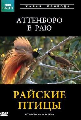 Постер фильма BBC: Райские птицы (1996)