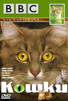 Постер фильма BBC: Кошки (1991)