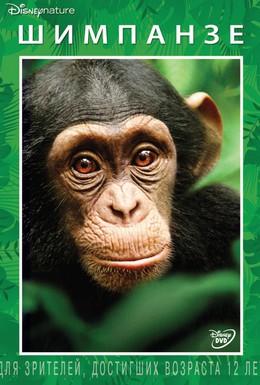 Постер фильма Шимпанзе (2012)