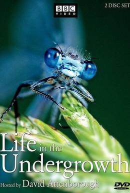 Постер фильма BBC: Жизнь в микромире (2005)