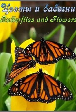 Постер фильма Цветы и бабочки (2008)