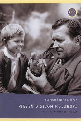 Постер фильма Песня о сизом голубе (1961)