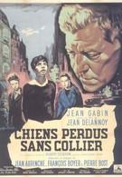 Бродячие собаки без ошейников (1955)