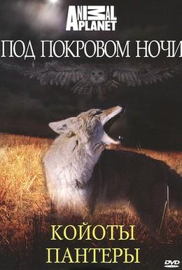 Постер фильма Под покровом ночи (2009)