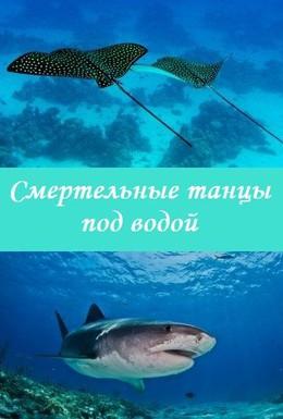 Постер фильма Смертельные танцы под водой (2005)