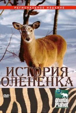 Постер фильма История олененка (2003)