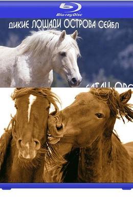 Постер фильма Вслед за дикими лошадьми (2008)