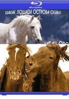 Вслед за дикими лошадьми (2008)