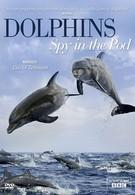 Дельфины скрытой камерой (2014)
