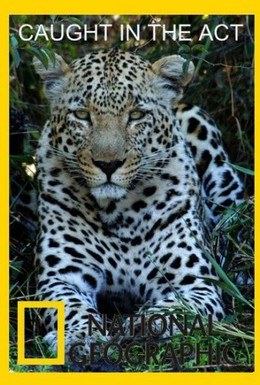 Постер фильма В мире животных (2007)