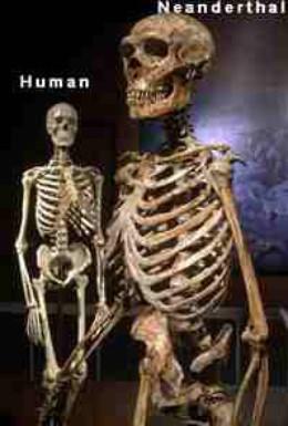 Постер фильма BBC: Неандерталец (2005)