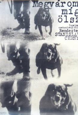 Постер фильма Я подожду, пока ты убьешь (1973)