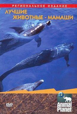 Постер фильма Animal Planet. Лучшие животные-мамаши (2004)