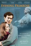 Вечерний первоцвет (1966)