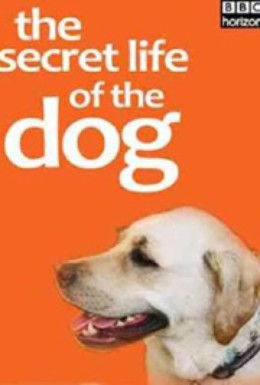 Постер фильма BBC. Тайная жизнь собак (2013)