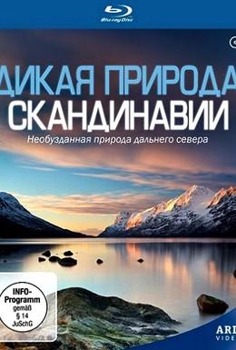 Постер фильма Дикая природа Скандинавии (2011)
