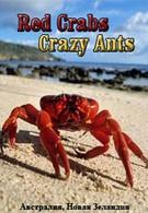 Красные крабы. Жёлтые муравьи (2000)