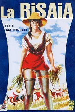 Постер фильма Рисовое поле (1956)