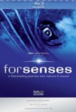 Постер фильма Forsenses: A Fascinating Journey Into Nature & Sound (2009)