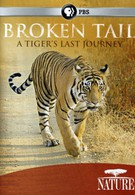 PBS Nature. Сломанный хвост. Последнее путешествие тигра (2010)