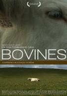 Коровы (2011)