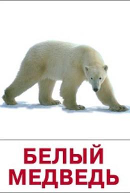 Постер фильма Белый медведь (1975)