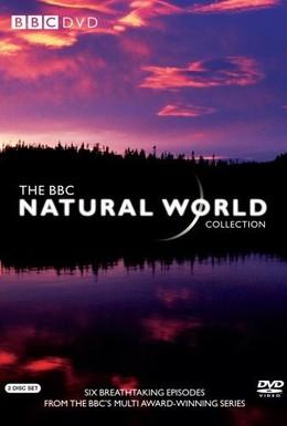Постер фильма BBC: Живой мир (2013)
