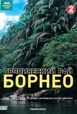 Постер фильма BBC: Тропический рай Борнео (2007)