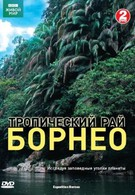 BBC: Тропический рай Борнео (2007)