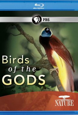 Постер фильма Птицы рая (2010)