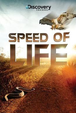 Постер фильма Скорость жизни (2010)