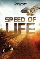 Скорость жизни (2010)