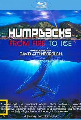 Постер фильма Лёд (2008)