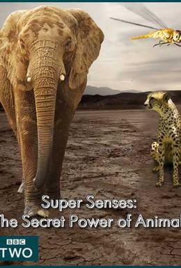 Постер фильма Уникальные способности животных (2014)