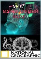 Мой музыкальный мозг (2009)