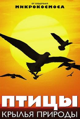 Постер фильма Птицы: Крылья природы (2002)