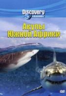 Акулы Южной Африки (2001)